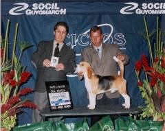 Criação selecionada da raça beagle
