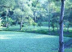 Lago com peixes na pousada colina verde