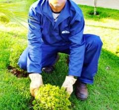 Uniforme manga longa para jardinagem e paisagismo