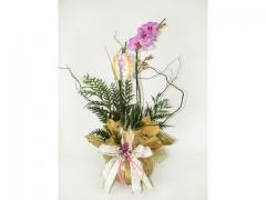 Http://www.ikebanaflores.com.br/orquidea-phala-tela-dourada.html