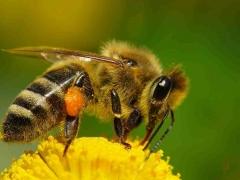 Casa da abelha - qualidade e bom preço