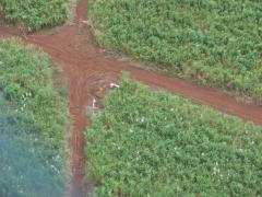 Aero fazendas - imagens aéreas para propriedades rurais - foto 27