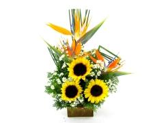 Ikebana com girassol e estrelízia