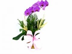 Orquídeas para presente