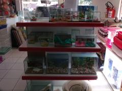 Seção de peixes