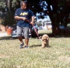 Guia Retrátil Avenue para Cães até 16Kg Hagen Trava - Refletor de Segurança para Passeios Noturnos - Alça Acolchoada - Fita com 4 metros de comprimento http://www.pet-eshop.com.br/acessorios/guias-retrateis/guia-retratil-avenue-caes-16kg-hagen.html