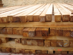 Pernas de pinus em promoÇÃo. (21) 2410-5490