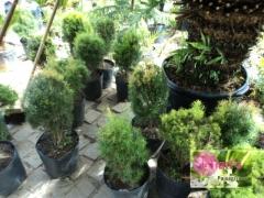 Serviços de manutenção de jardim em geral.