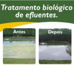Solubac ambiental - foto 9
