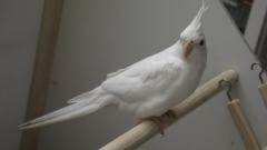Paraíso dos pássaros - foto 16