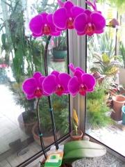 Todos os tipos de flores e plantas