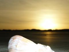 Praia do cassino, um ocêano de riquezas.