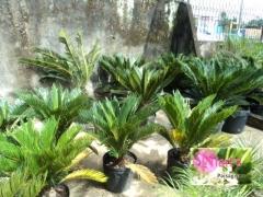 Empresa de jardinagem em salvador