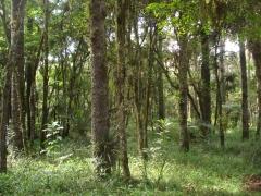 área de terreno com bosque privativo no residencial o recanto ii - bosques residenciais - piraquara/pr