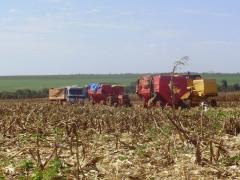 Colheita de milho pioneer