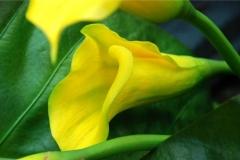 Esmeralda jardinagem - foto 26
