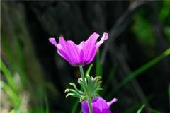 Esmeralda jardinagem - foto 24