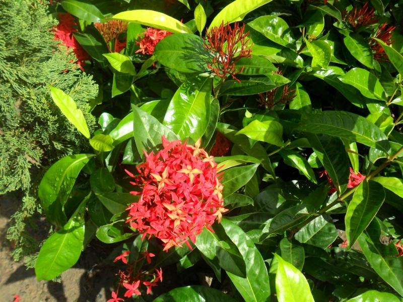 Niarts Paisagismo | Empresa de Jardinagem Bahia