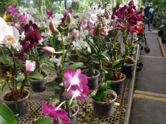 Niarts paisagismo | empresa de jardinagem bahia - foto 4