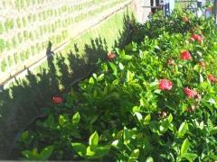 Niarts paisagismo | empresa de jardinagem bahia - foto 21