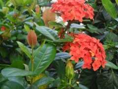 Niarts paisagismo   empresa de jardinagem bahia - foto 21