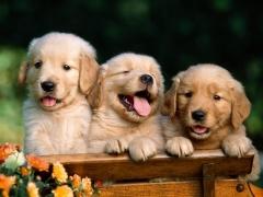 A mais completa linhas de acessórios para cachorros!!