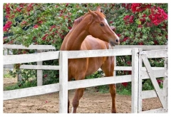 Cavalo na quadra