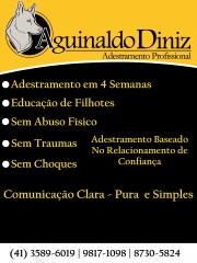 ADESTRAMENTO EM CURITIBA - 4 SEMANAS - COM AMOR, RESPEITO, SEM CHOQUES E SEM TRAUMAS.