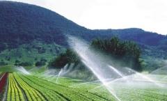 Irrigação de hortaliças