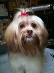 Love Dog - Banho e Tosa, Hospedagem de Cães - Foto 2