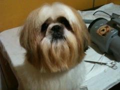 Love dog - banho e tosa, hospedagem de cães - foto 9