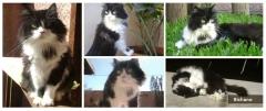 Hospedagem para gatos