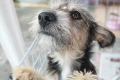 Caoveniência pet shop - foto 3