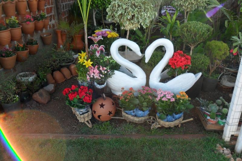 cisnei-floreira