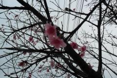 Sakura - flor de cerejeira - no japão, simboliza o amor, a felicidade, a renovação, e a esperança.