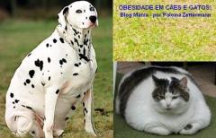Obesidade em cÃes e gatos! seu cãozinho! seu gatinho! estão acima do peso? acesse vet mania e aprenda uma dica para verificar! a obesidade em cães e gatos é definida ... blog vet mania - paloma zettermann http://vet-mania.blogspot.com.br/2014/12/obesidade-em-caes-e-gatos.html #blogvetmania #blovetmaniaobesidadeemcaesegatos #obesidadeemcaesegatos #palomazettermann