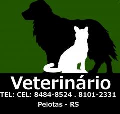 Cães e gatos medico veterinario