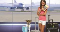 Canil pedra de guaratiba artigos gol libera embarque de cÃes e gatos na cabine das aeronaves! com isso a gol segue uma tendência do mercado uma vez que... acessar artigo: http://pet-eshop.blogspot.com.br/2015/03/gol-libera-embarque-de-caes-e-gatos-na.html #canilpedradeguaratibaartigos #canilpedradeguaratiba #golliberaembarquedecaesegatosnacabinedasaeronaves #transportedecaes #transportedegatos