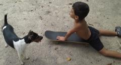 Terrier brasileiro (fox paulistinha)  glória! aprendendo a andar de skate! proprietária: renata. filhotes: http://www.canilpguaratiba.com/html/n6letrah_tb.html facebook: http://pt-br.facebook/canilpedradeguaratiba instagram: http://instagram.com/canilpguaratiba #canilpedradeguaratibaterrierbrasileiro #canilpedradeguaratibafoxpaulistinha #canilpedradeguaratiba #terrierbrasileiro #foxpaulistinha #terrierbrasileirocanilpedradeguaratiba #foxpaulistinhacanilpedradeguaratiba