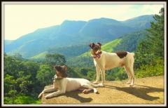 Bento da pedra de guaratiba! apresenta! sua filha zoé! filhotes em: http://www.canilpguaratiba.com/html/filhotes_tb.html
