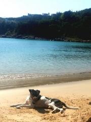 Terrier brasileiro - filhotes em: http://www.canilpguaratiba.com/html/n6letrak_tb.html
