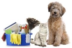 Cães! gatos! como efetuar a higienização do ambiente! http://pet-eshop.blogspot.com.br/2011/04/higiente-do-ambiente-manejo.html