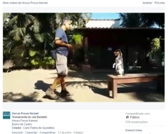 Balotelli! terrier brasileiro (fox paulistinha) - http://www.facebook.com/229803423813105/videos/707078236085619/?fref=nf