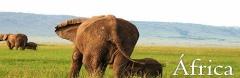 Faça uma viagem de safari com inova idea viagens
