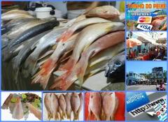 Toinho do peixe  para melhor lhe atender estamos situado na feirinha do guanabara no centro  trabalhamos com produtos de qualidade  variados tipos de peixes e camarões com preço diferenciado. aceitamos cartões de credito.  toinho do peixe  venha nos fazer uma visita estamos localizados na feira do guanabara, centro contato: 73 99998 8267 / 98231 2487/ 99810 2248 / 98870 5564 toinho do peixe  trabalhando a mais de 20 anos para melhor lhe servir. toinho do peixe  agradece a preferência. comente nosso blogger. http://dicasdauniao.blogspot.com.br/2015/06/toinho-do-peixe-em-ilheus.html?view=timeslide