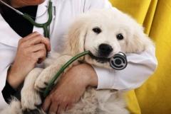 Plantão veterinário hospital - foto 4