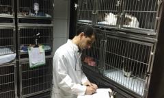 Foto 13 animais no Pernambuco - Plantão Veterinário Hospital