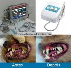 Www.veterinariadomiciliar.com  - remoção de tártaro em cães