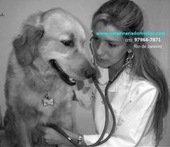 Veterinária michelle gandra - www.veterinariadomiciliar.com