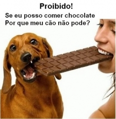 Se eu posso comer chocolate por que meu cÃo nÃo pode? canil pedra de guaratiba artigos sempre que chegam épocas festivas como natal, reveillon, páscoa, etc... http://pet-eshop.blogspot.com.br/search?updated-min=2012-01-01t00:00:00-08:00&updated-max=2013-01-01t00:00:00-08:00&max-results=11 #canilpedradeguaratiba #canilpedradeguaratibasrtigos #chocolatefazmalparacachorro